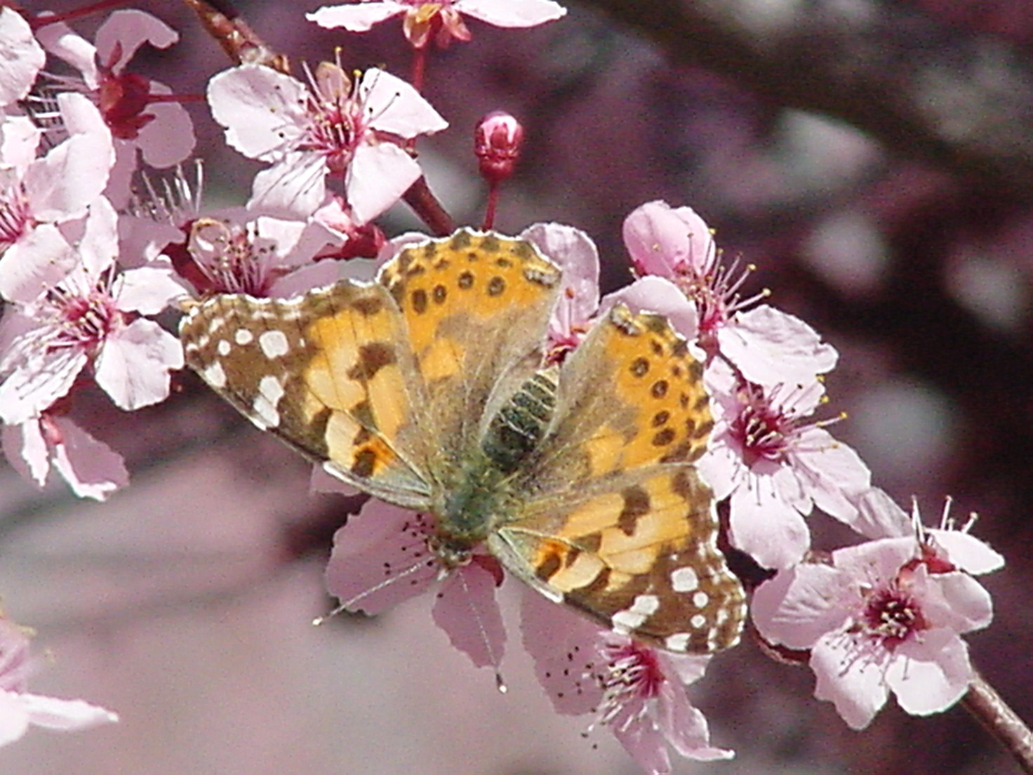 butterflies-066
