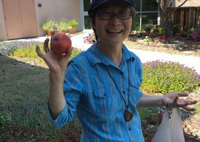 peach harvest1