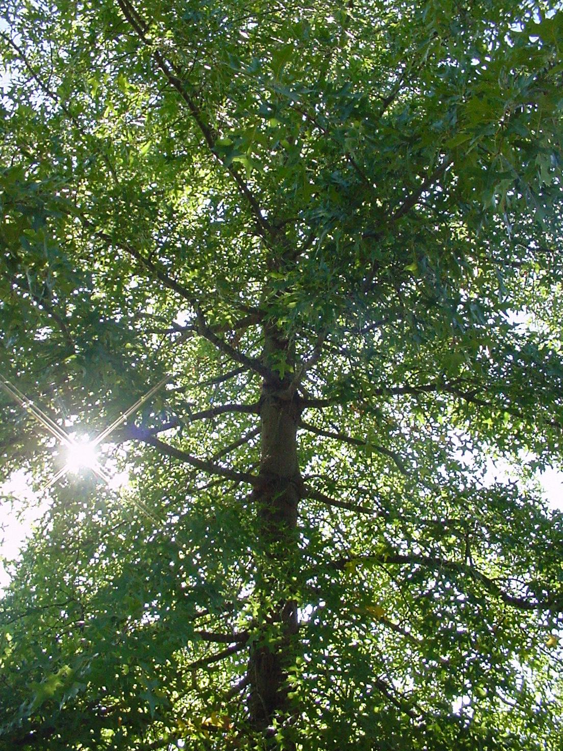 tree-sunlight